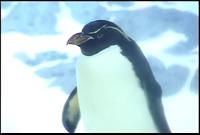 ゆかいなどうぶつたち ~イルカ・シャチ・ペンギン~