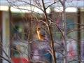 雀の鳴きまねをするモズちゃん♪と消防車のサイレン