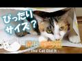 紙袋にすっぽり入る猫がかわいい 14 - Cat entering a paper bag -